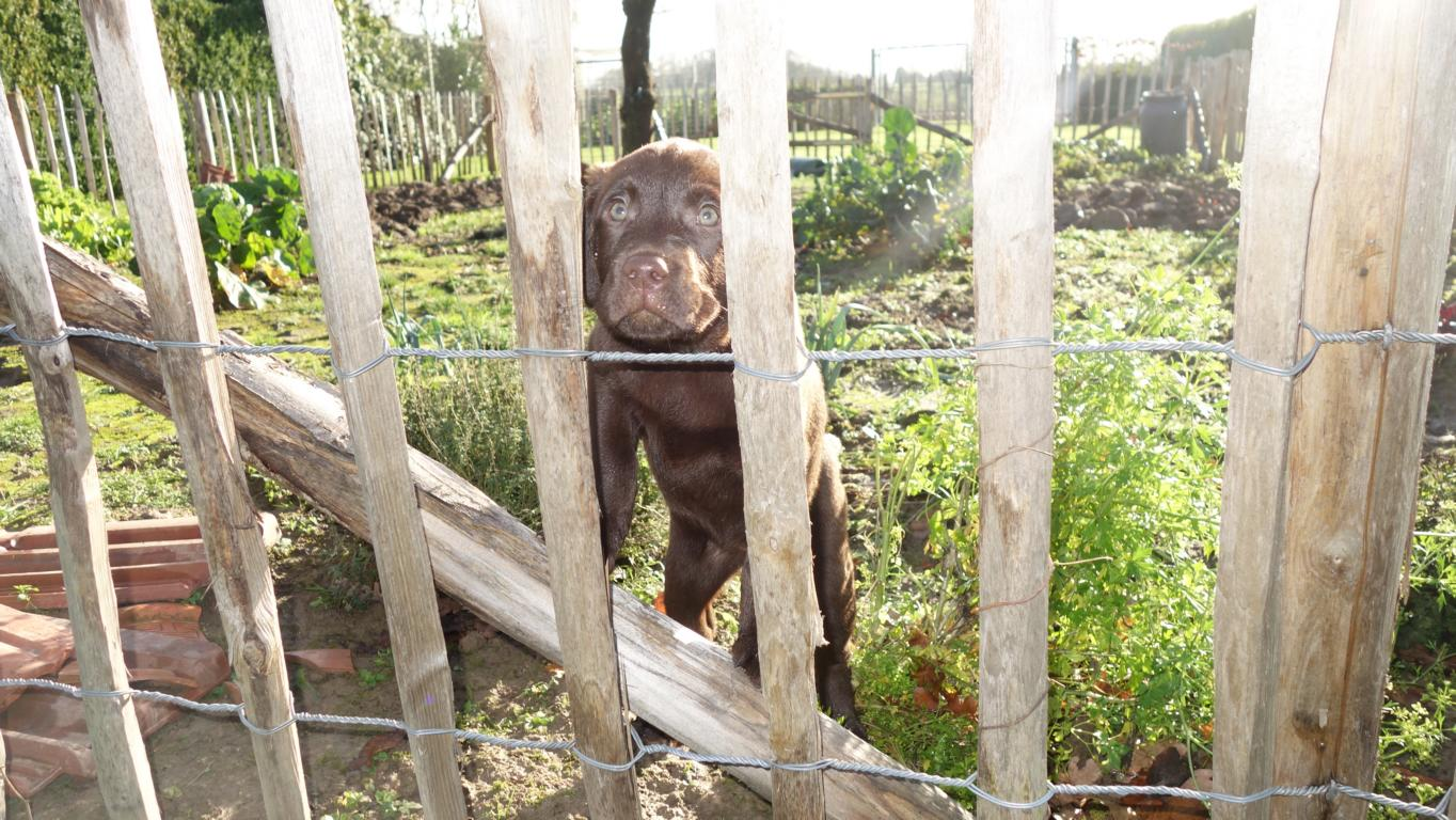 10. Woche Ina hat sich durch den Zaun gemogelt